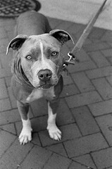 Four-year-old pit bull mix Prada has been granted a reprieve from doggie death row in Nashville, Tennessee
