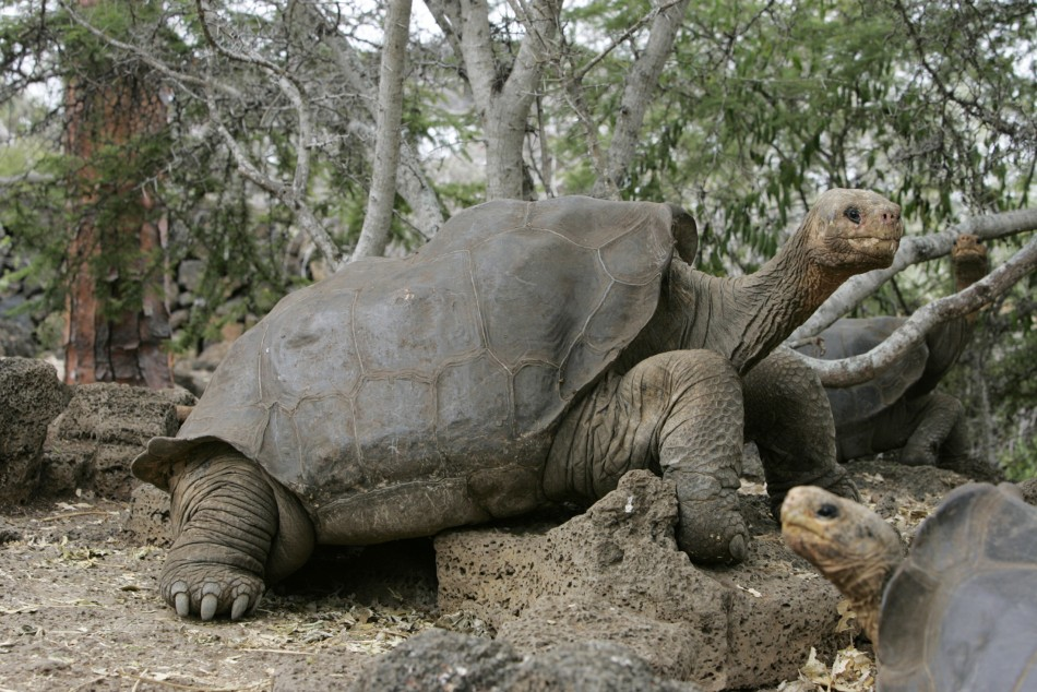 Worlds Oldest Tortoise