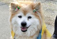 World's Oldest Dog