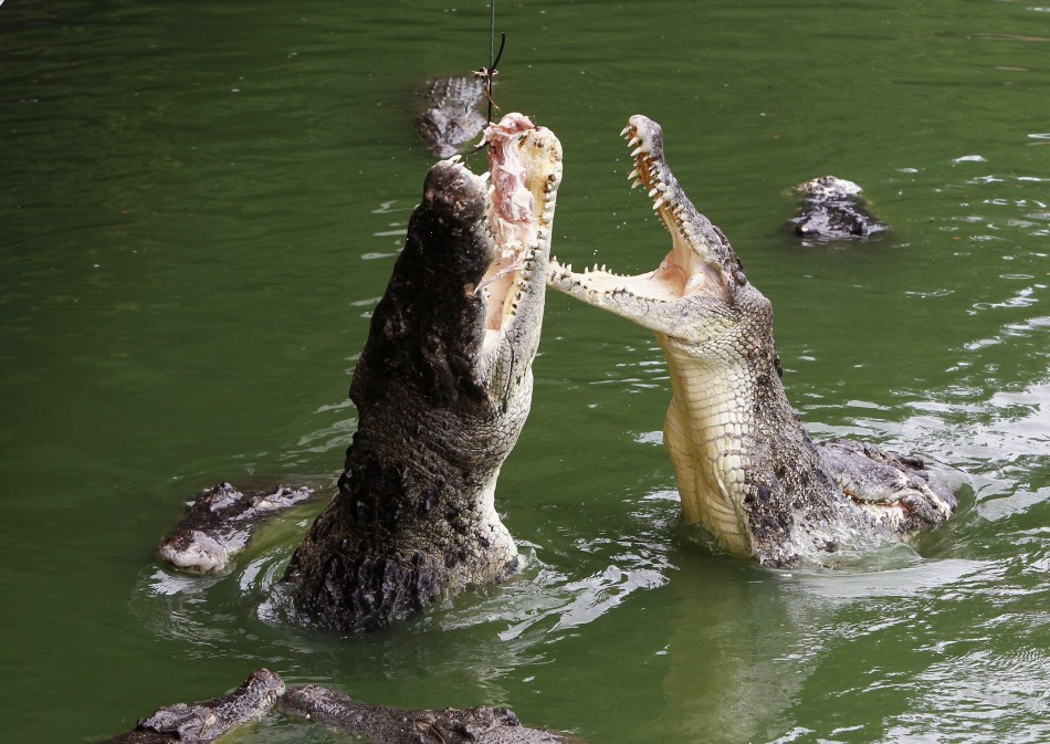 Crocs eat their young in times of resource scarcity--the little ones make an easy target