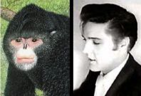 Elvis Monkey Discovered Among 200 New Mekong Species