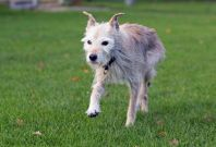 Pip oldest dog in the world Brentwood UK