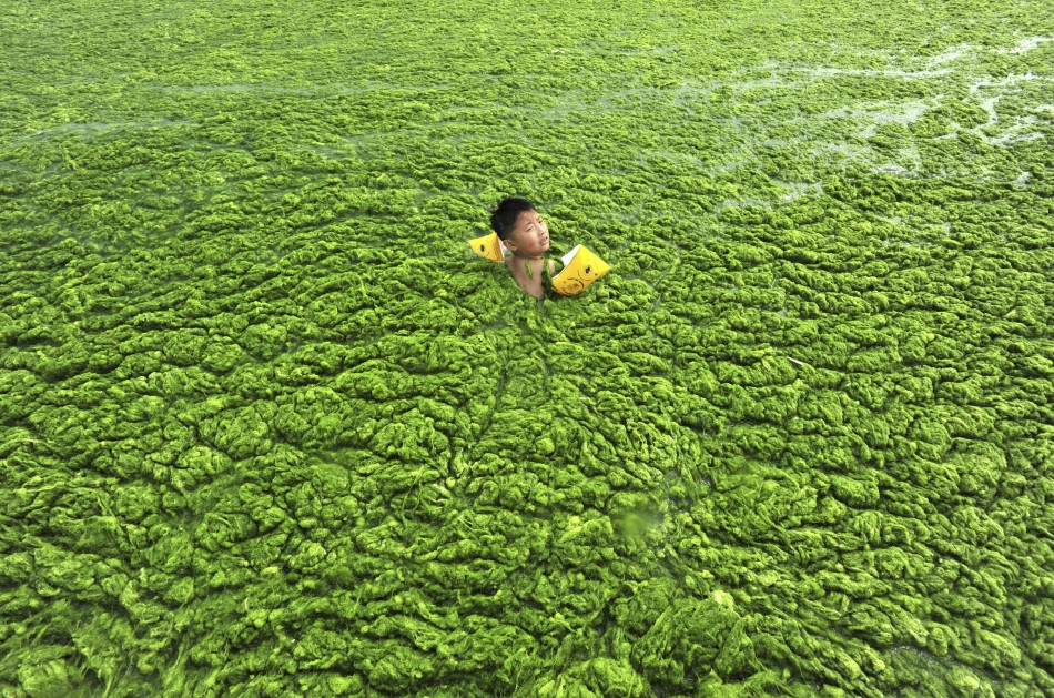 Algea Extracts Could Cure Cardiac Disease, say Researchers