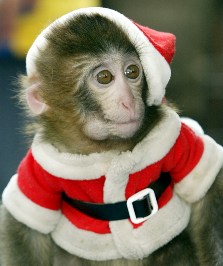 Chap, dressed in a Santa Claus outfit
