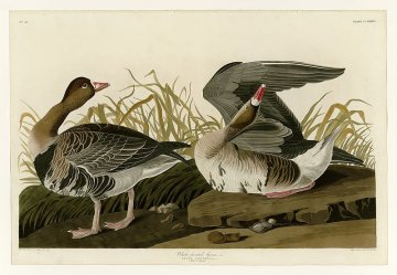 Rare Edition of Audubon's 'The Birds of America' Estimated at $10 Million