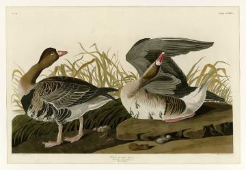 Rare Edition of Audubon's 'The Birds of America' Estimated at $10 Million