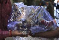 Tigers Parts Seized