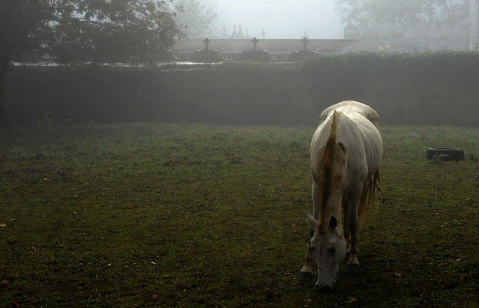 Horse owners have been warned to be vigilant after the mutilation and killing