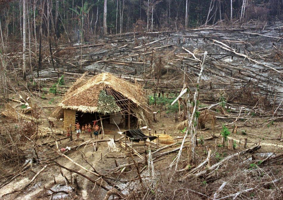 FILE PHOTO OF YANOMAMI INDIANS NEAR BURNED AND CLEARED AMAZON JUNGLE SURROUNDINGS.FILE PHOTO OF YANOMAMI INDIANS NEAR BURNED AND CLEARED AMAZON JUNGLE SURROUNDINGS.