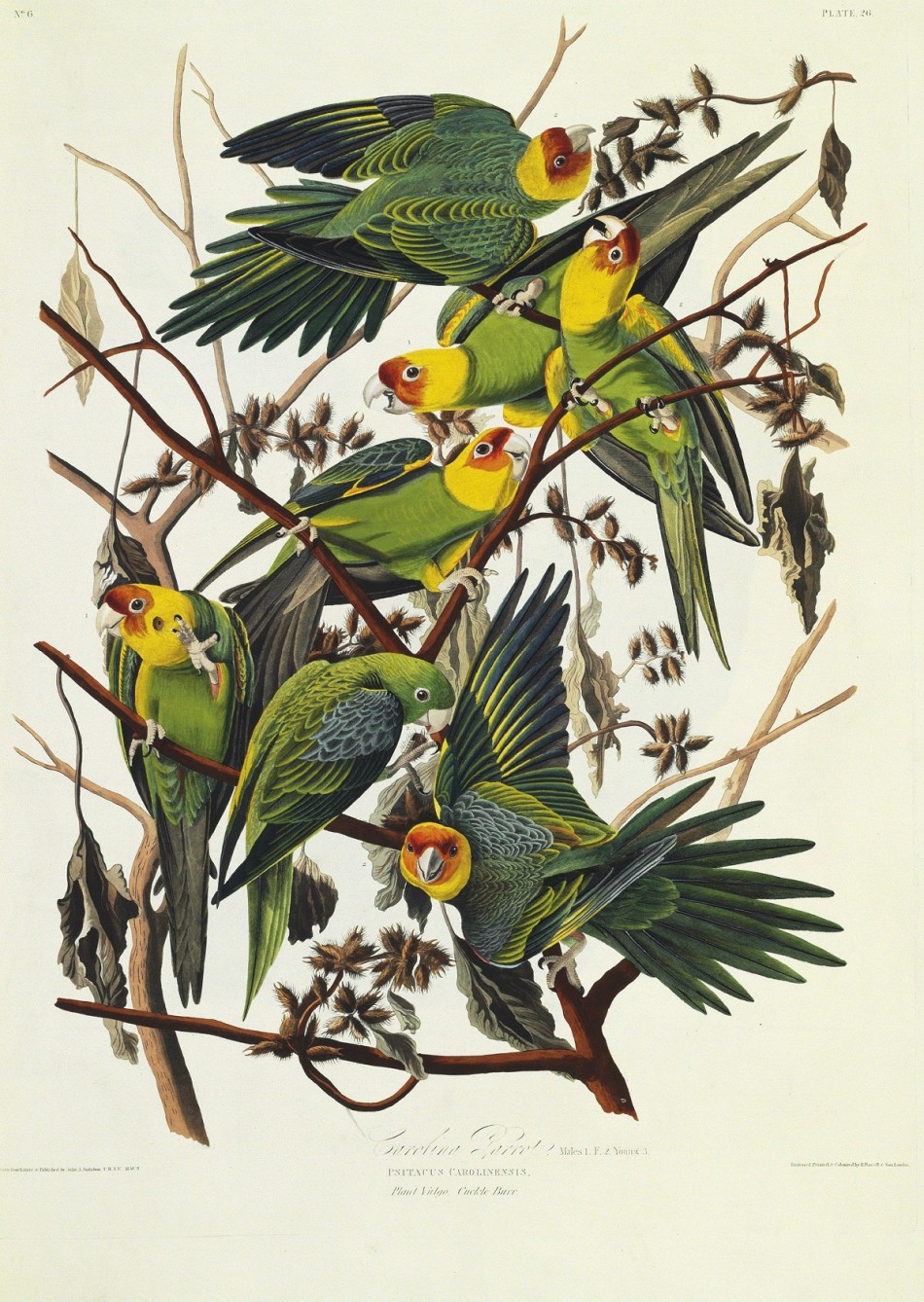 A rare first edition of John James Audobon's 'The Birds Of America' (1827-1838) will be auctioned at Christie's in New York