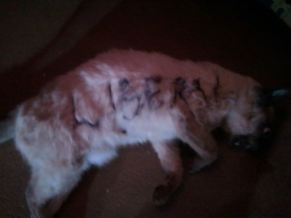 The slaughtered cat of Jake Burris