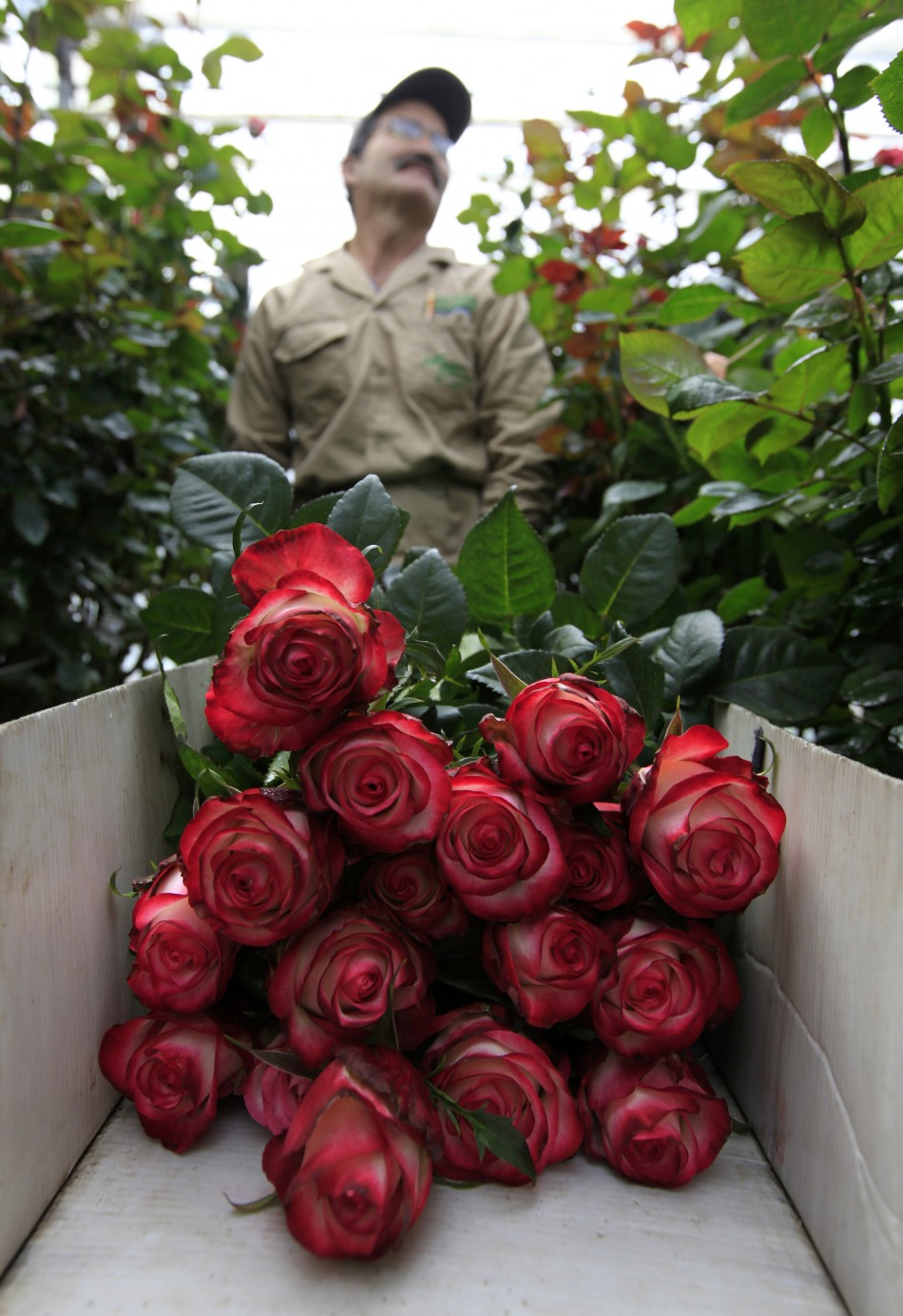 Colombian Flower Growers Prepare for Valentine's Day