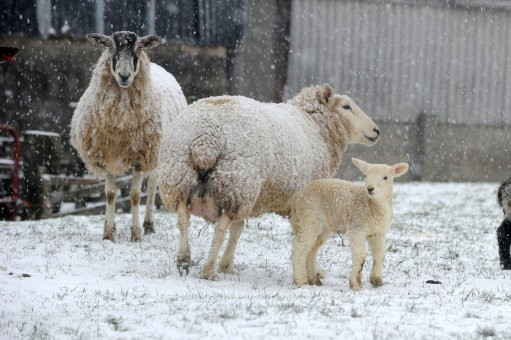 Britain weathering sever snow fall
