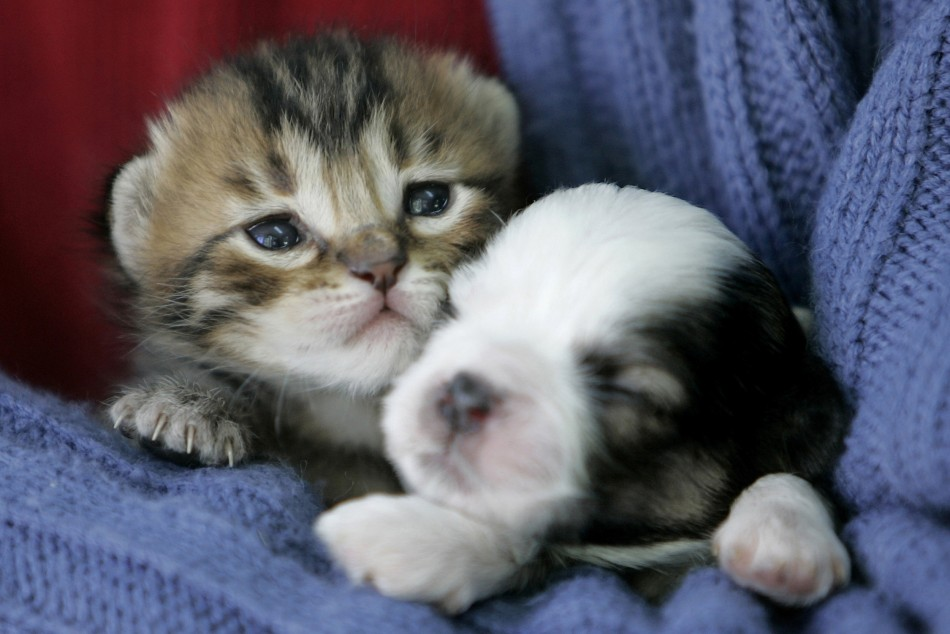 Bizzare animal friendships