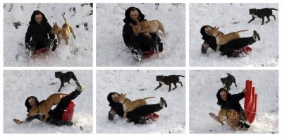 A combination photograph shows a man being knocked of his toboggan by a dog in Newtown Linford