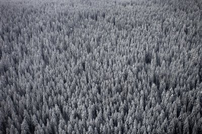 An aerial view of pine forests near the central Bosnian town of Vlasic covered by snow in winter