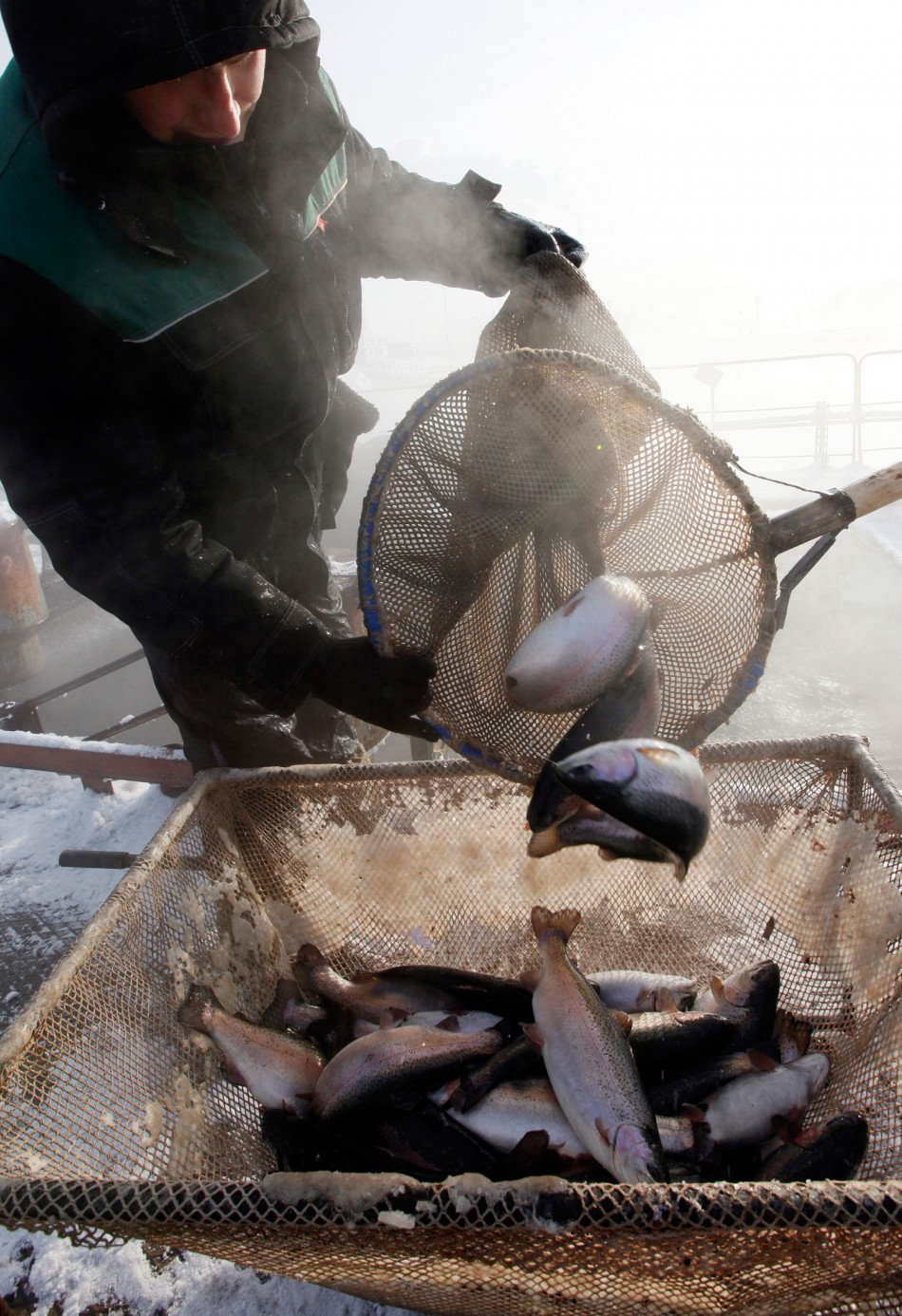 Overfishing of EU Stocks Cost 3.2 Billion Euros and 100000 Jobs
