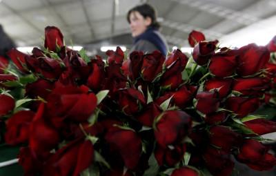 Valentine039s Day 2012