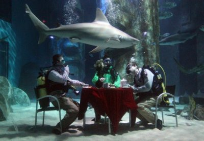 Aquarists at The Sea Life London Aquarium hold a tea party in the Pacific Reef Display shark tank to challenge the perception of them as monsters of the sea.