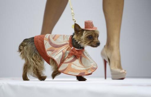 A dog model