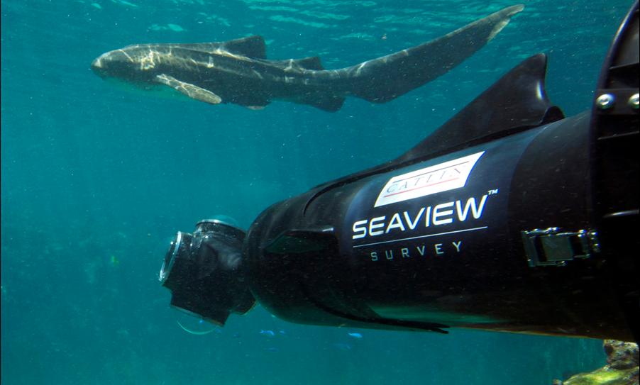 Australia's Great Barrier Reef: Ocean-life