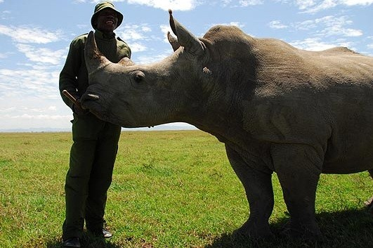 Max the Rhino
