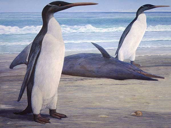 Researchers Have Reconstructed Four Feet Tall Giant Penguin Fossil