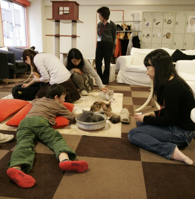 Customers play with cats at at cafe Tokyo (Reuters)