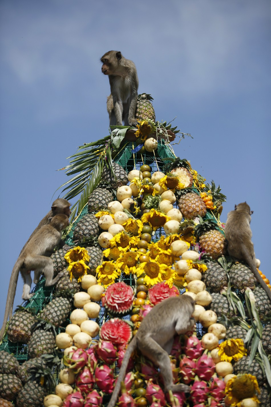 The Lopburi Monkey Festival