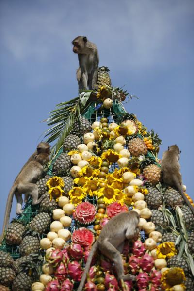The Lopburi Monkey Festival