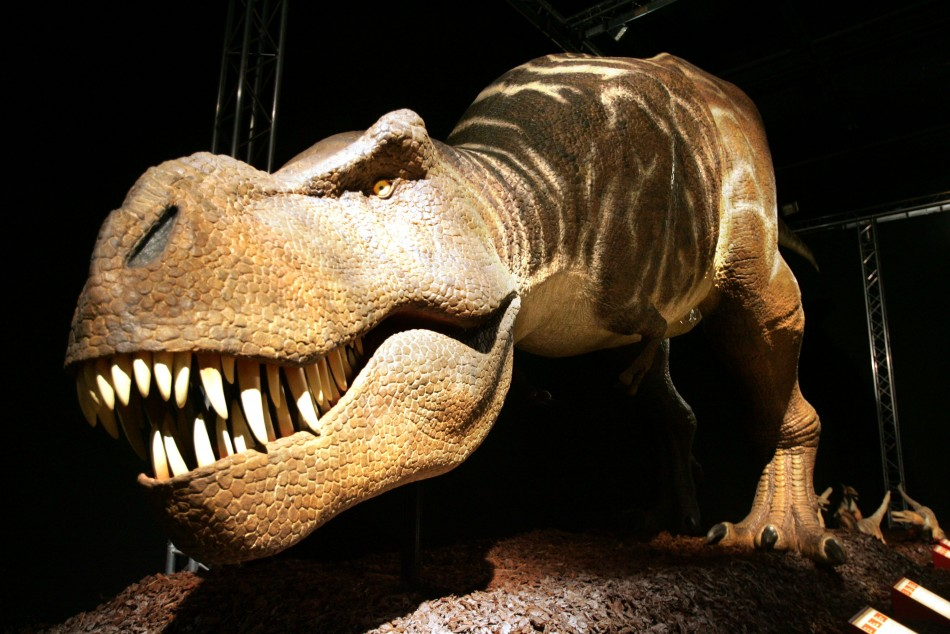 4. Natural History Museum