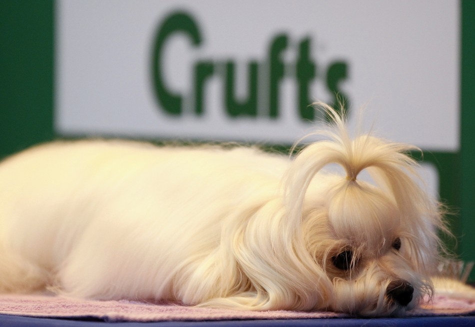 Dogs Arrive for Start of Crufts 2012