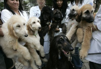 The worlds first cloned dog Snuppy and its puppies are seen with researchers at Seoul National Universitys College of Veterinary Medicine in Seoul
