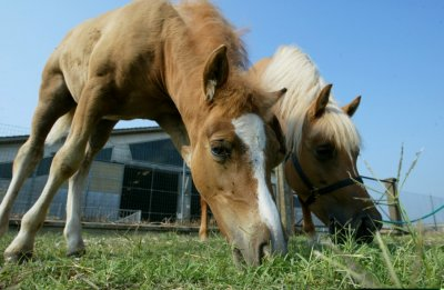 The first world cloned horse