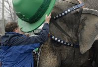 An elephant wears an Irish-themed hat on St. Patrick's Day during their parade to announce the arrival of the circus in Washington