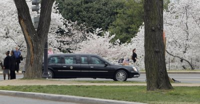 U.S. President Barack Obama039s limousine passes Cherry Blossoms as his motorcade drives from the U.S. Capitol to the White House following a lunch in commemoration of St Patrick039s Day in Washington