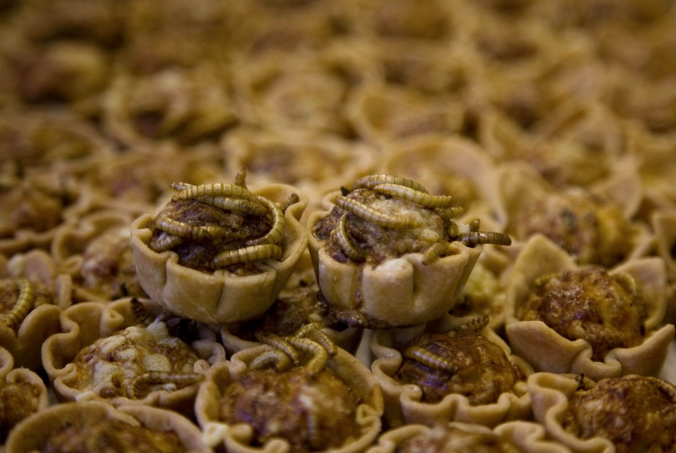 Mealworm quiches are seen at the Rijn IJssel school for chefs in Wageningen