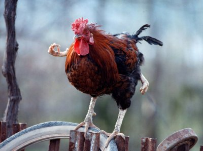 Four-leg cock