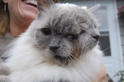 Cat with two faces