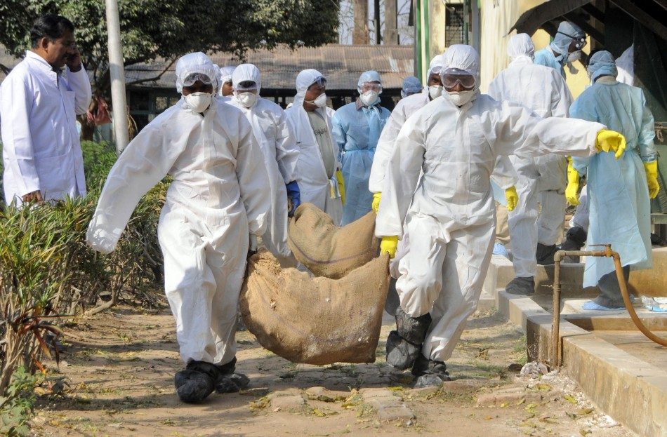 Current strain of H5N1 virus, or bird flu, not easily passed between humans