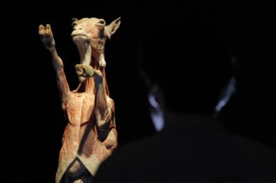 Animals Inside Out Gunther von Hagen Showcases Exclusive Plastinated Specimens