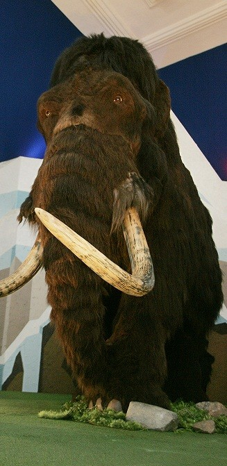 Humans Could Have Killed Woolly Mammoths