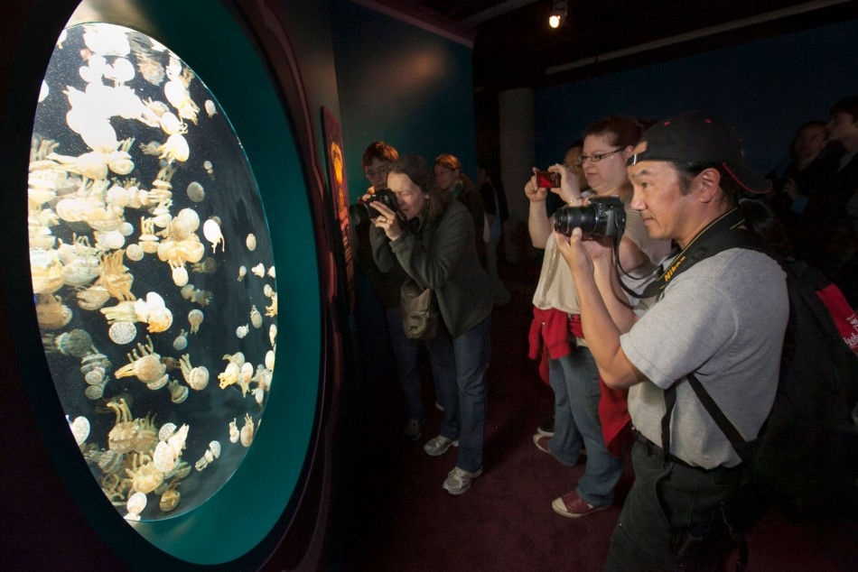 Millions of Jellyfish Species in Monterey Bay Intrigues Onlookers