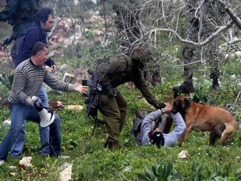 Army dog attacking a protester at the  Kafr Qaddum village