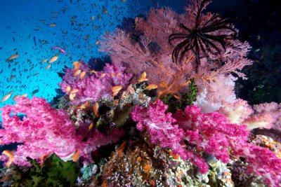 Spectacular Underwater Images by 2012 Miami Amateur Photography Contest Winners
