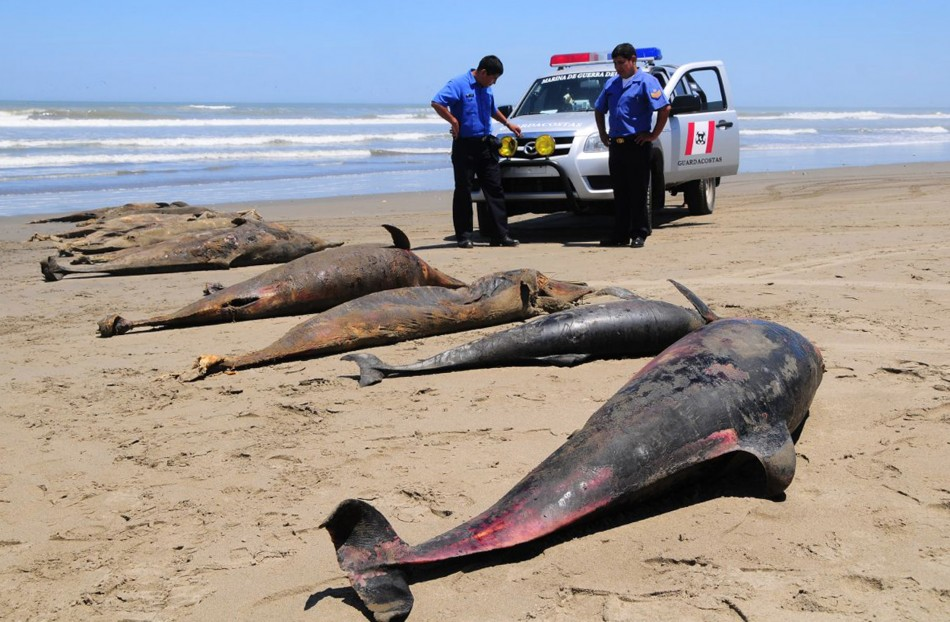 Dolphins, Birds Mysteriously Die in Staggering Numbers on Peru Beaches