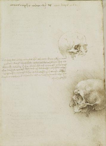 The cranium