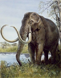 Worlds Smallest Woolly Mammoth Discovered Crete