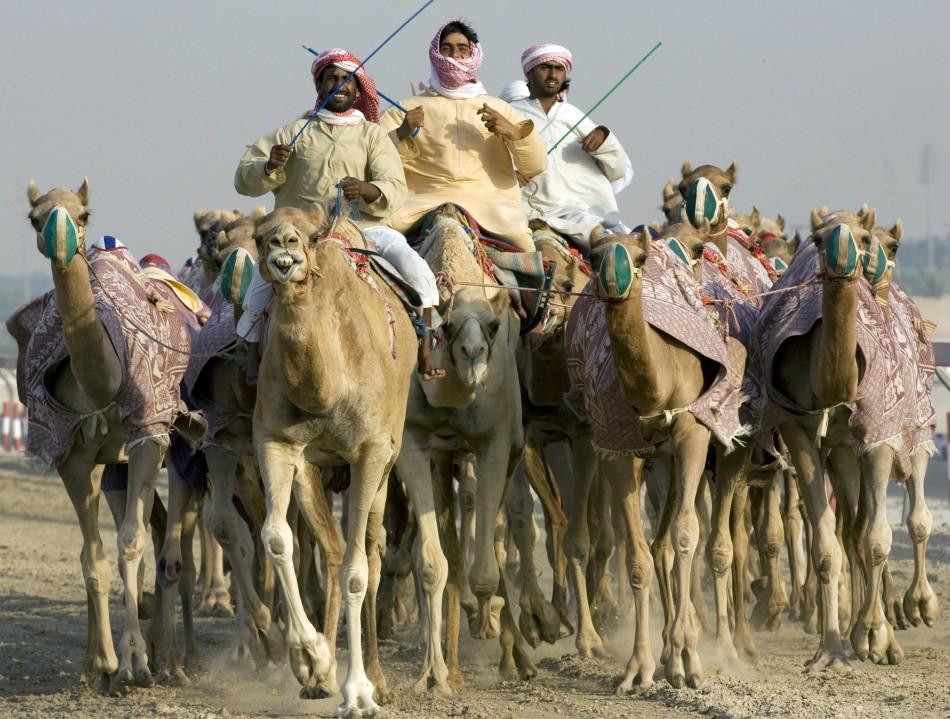 Saudi Arabia Plans World's First Camel Club
