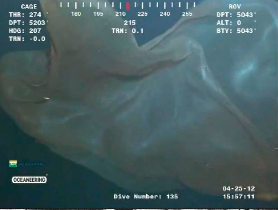 Mysterious 'Sea Monster' Confirmed as Giant Jellyfish